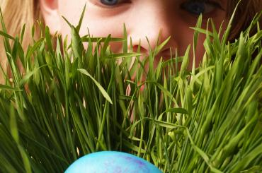 Merch yn chwilio am wy Pasg / Girl looking for Easter egg